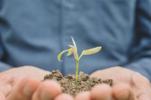 Feche a mão segurando o crescimento da árvore