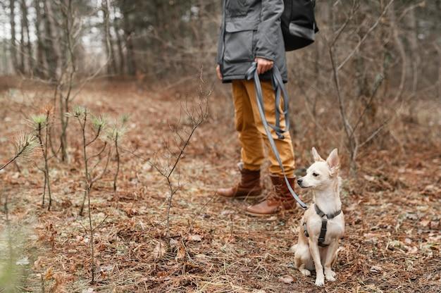 Feche a mão segurando uma coleira de cachorro