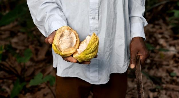 Feche a mão segurando uma fruta aberta