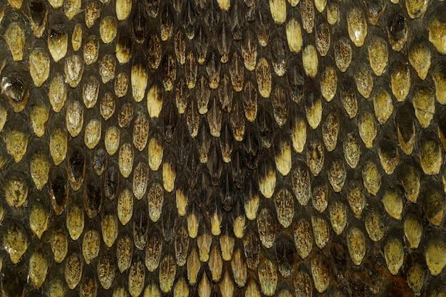 Feche a pele de cobra víbora real para plano de fundo padrão animal