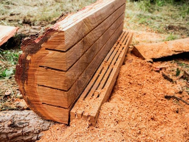 Feche a superfície lisa de uma árvore grande, corte o tronco e processado por uma serra elétrica com serragem no chão.
