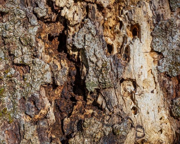 Feche a textura da árvore