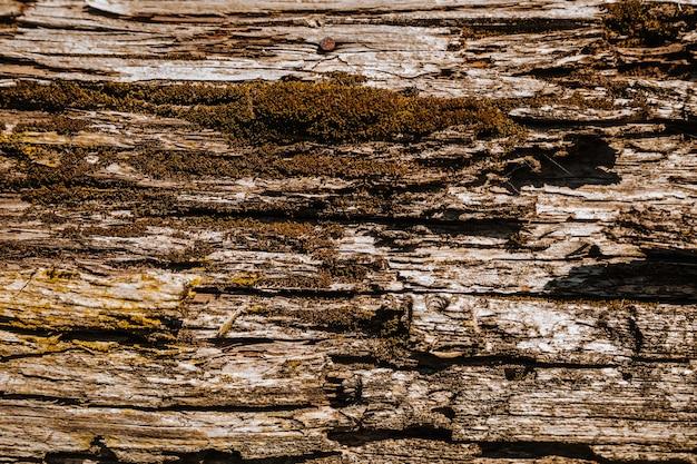 Feche a textura da casca de árvore, a superfície áspera do tronco.