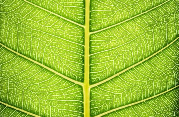 Feche a textura da folha verde