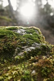 Feche a vegetação da natureza