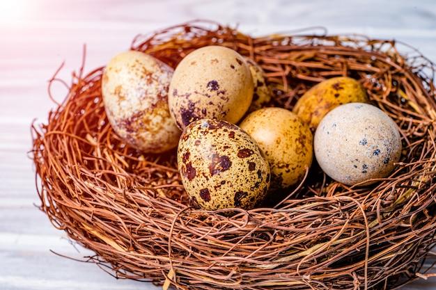 Feche a vista dos ovos de codorna, deitado no ninho.