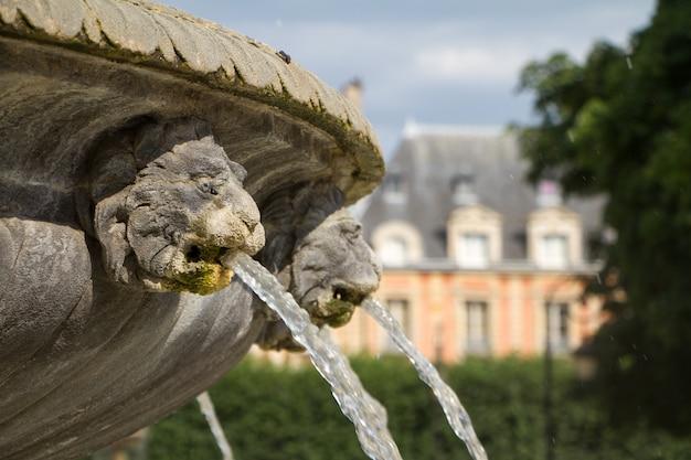 Feche acima da bacia da fonte de pedra e boca de uma fonte dourada do leão