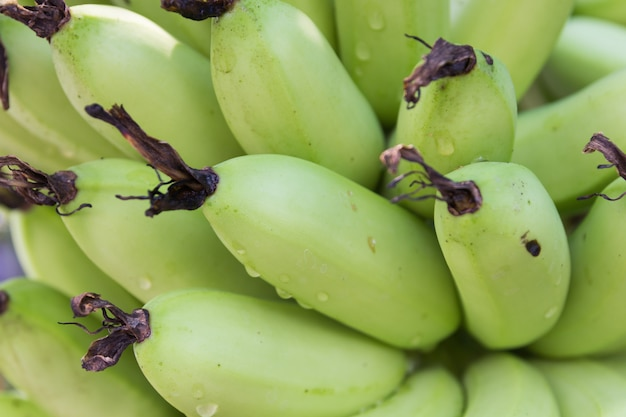 Feche acima da banana crua na árvore