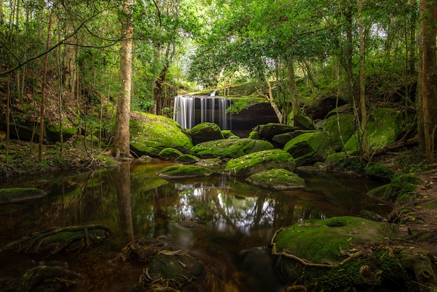 Feche acima da cachoeira da vista na floresta profunda no parque nacional, cena do rio da cachoeira.