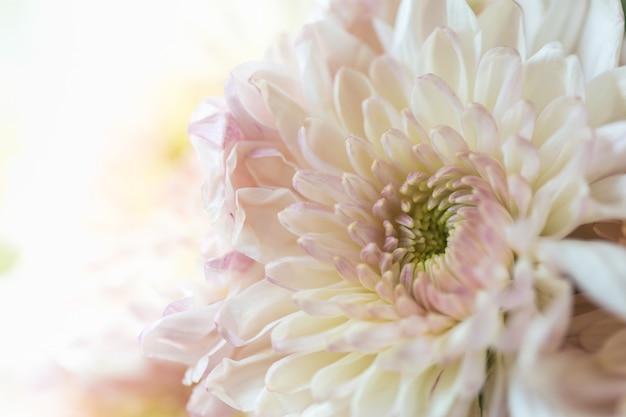 Feche acima da flor amarela cor-de-rosa alaranjada bonita da dália.