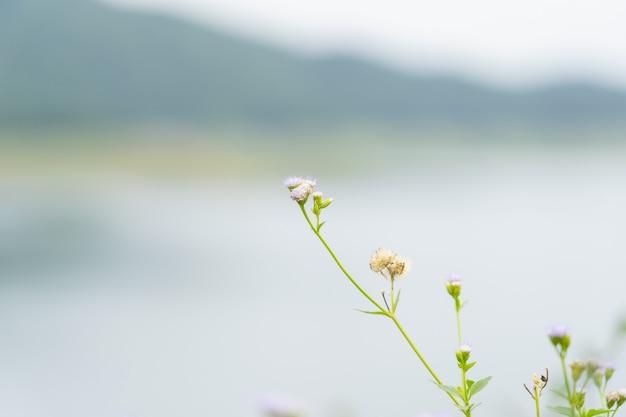Feche acima da flor da grama sobre a represa.