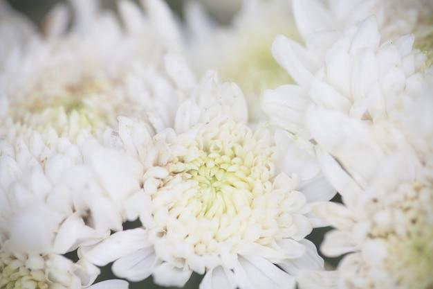 Feche acima da flor macro