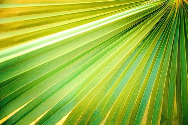 Feche acima da folha de palmeira verde.