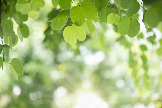 Feche acima da folha do verde da natureza nas hortaliças borradas sob a luz solar.