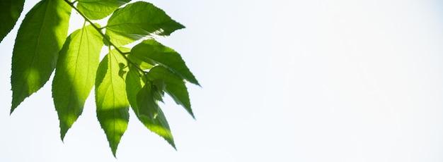 Feche acima da folha do verde da opinião da natureza no fundo borrado das hortaliças sob a luz solar com paisagem natural clara do céu e copie o fundo das plantas, conceito da tampa da ecologia.