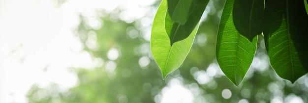 Feche acima da folha do verde da opinião da natureza no fundo borrado das hortaliças sob a luz solar com paisagem natural das plantas do fundo do bokeh e da cópia, conceito da tampa da ecologia.