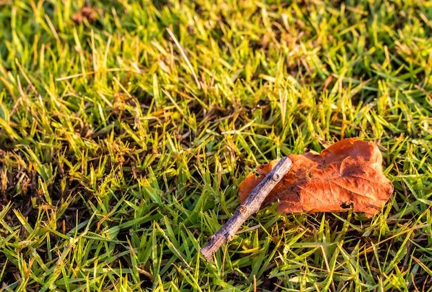 Feche acima da folha seca e do ramo seco no gramado verde no jardim com espaço da cópia.