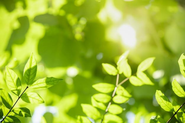 Feche acima da folha verde da opinião da natureza no fundo borrado das hortaliças sob a luz solar com bokeh e copie a paisagem natural das plantas do fundo do espaço,