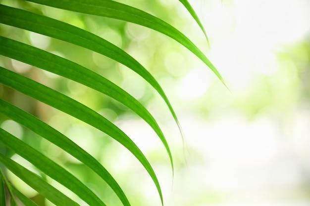 Feche acima da folha verde da vista da natureza com gota da chuva no fundo borrado das hortaliças sob a luz solar com bokeh e copie a paisagem natural das plantas do fundo do espaço,