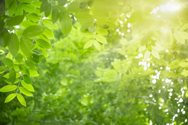 Feche acima da folha verde da vista da natureza no fundo borrado das hortaliças sob a luz solar com bokeh