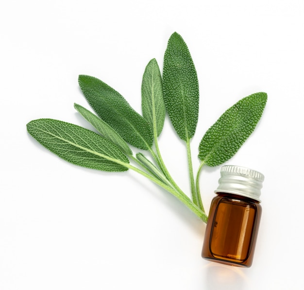 Feche acima da folha verde fresca da erva prudente com uma garrafa do óleo essencial no fundo branco