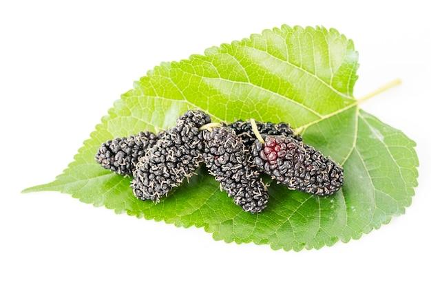 Feche acima da fruta da amoreira com folha verde