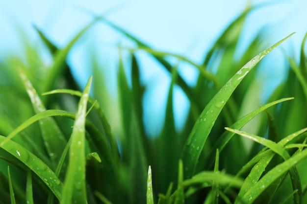Feche acima da grama verde