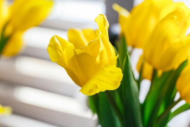 Feche acima da imagem da tulipa amarela
