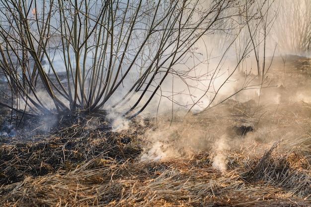 Feche acima da imagem de grama queimada e arbustos no campo após incêndio florestal