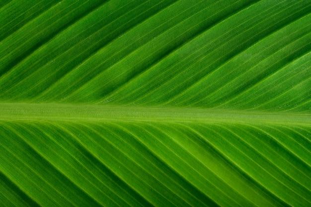 Feche acima da linha de folha verde