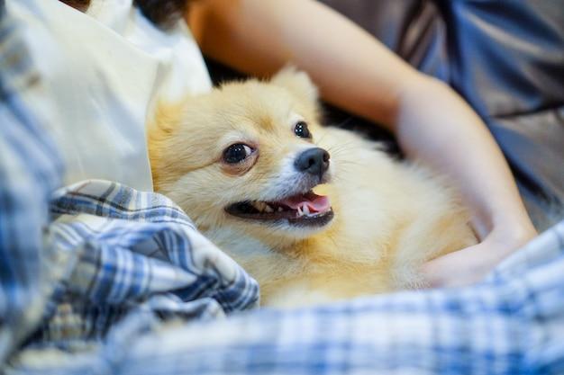 Feche acima da mulher que abraça o cão na sala a pessoa nova com o lazer do cão em casa, momento feliz e ama-me amor meu cão.