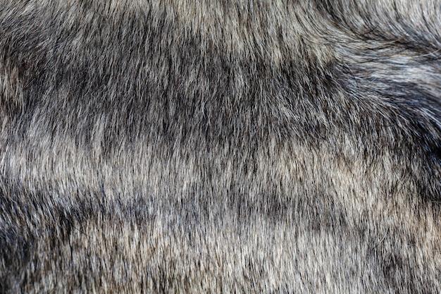 Feche acima da pele cinzenta do cão para o teste padrão e o fundo animais
