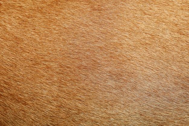 Feche acima da pele marrom do cão para a textura e o teste padrão.