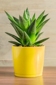Feche acima da planta de aloe vera no potenciômetro cerâmico amarelo no fundo de madeira. jardinagem doméstica, copyspace para texto