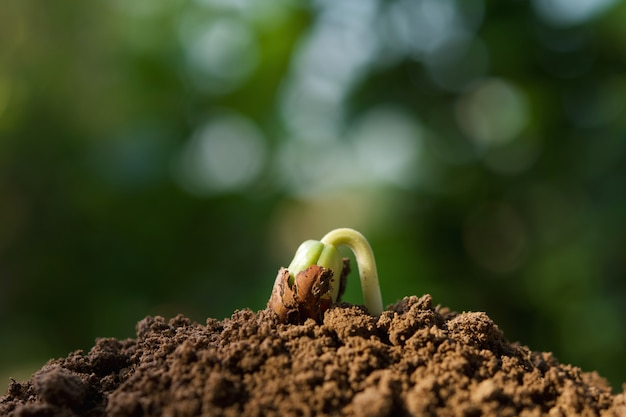 Feche acima da planta que cresce no solo com luz do sol no jardim