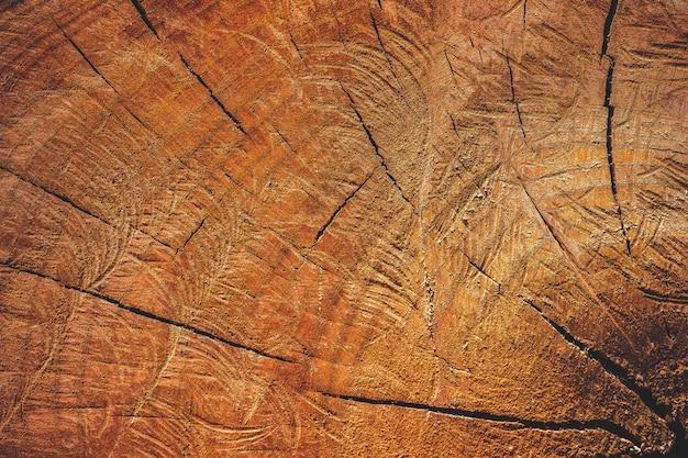 Feche acima da textura de cortar a madeira pela serra de cadeia. campanha conceitual de aquecimento global e preservação florestal.