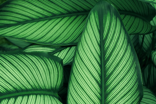 Feche acima da textura verde da folha na floresta tropical e projete o estilo do conceito da natureza do eco do trabalho de arte.