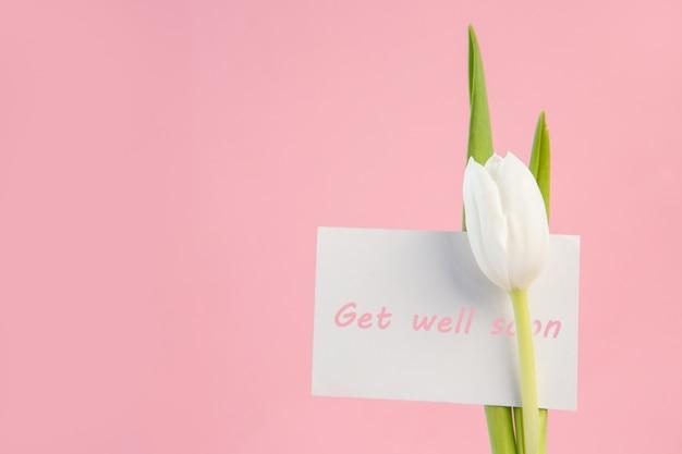 Feche acima da tulipa branca com um poço logo em cartão cor-de-rosa em um fundo cor-de-rosa