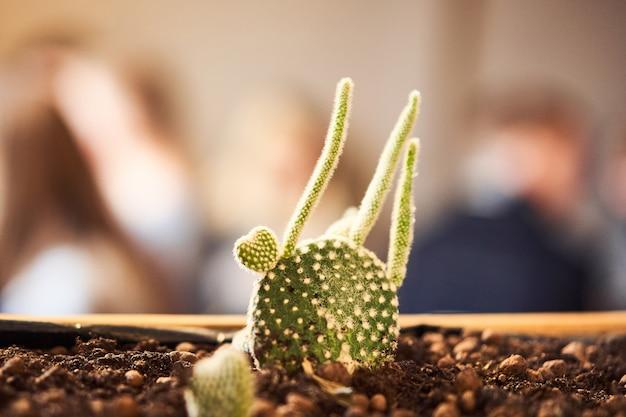 Feche acima da vista da planta suculenta verde em uma panela de barro no interior do sotão no café. imagem com pequeno campo de profundidade