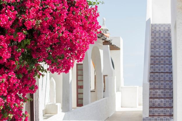 Feche acima da vista de uma flor roxa bonita da buganvília em uma casa portuguesa.