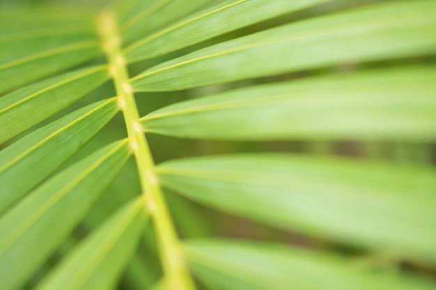Feche acima da vista de uma folha de palmeira verde bonita.