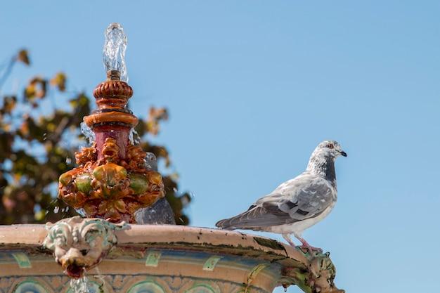 Feche acima da vista de uma fonte urbana histórica situada em ayamonte, espanha.