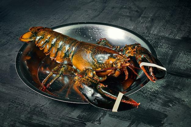 Feche acima da vista na lagosta viva de boston na bacia no fundo escuro. lagosta crua fresca