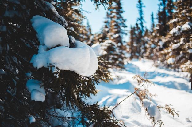 Feche acima das árvores e snowfield no inverno