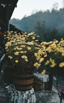 Feche acima das flores amarelas de uma montanha. destino de viagem