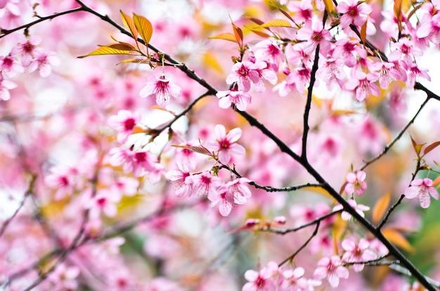 Feche acima das flores cor-de-rosa bonitas da manhã.