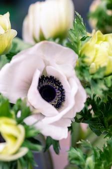 Feche acima das flores das anêmonas e do espaço para seu texto.