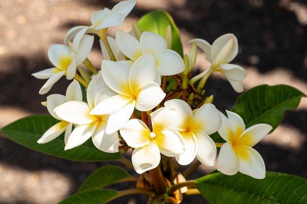 Feche acima das flores exóticas brancas e amarelas