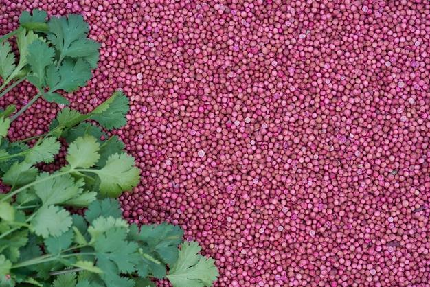 Feche acima das folhas do coentro em sementes de coentro secadas.