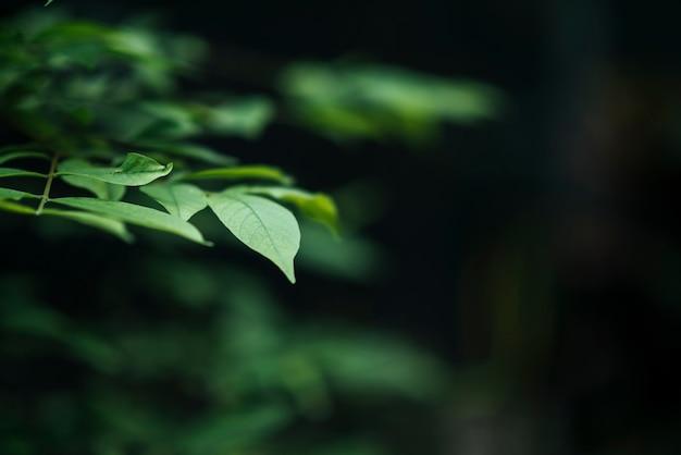 Feche acima das folhas verdes no fundo borrado da folha.